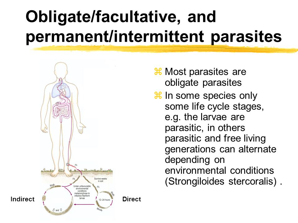 Obligate/facultative, and permanent/intermittent parasites zMost parasites are obligate parasites zIn some species only some life cycle stages, e.g.