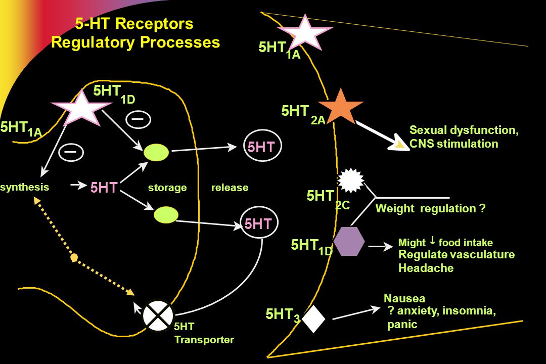 5-HT Receptors Regulatory Processes 5HT 1A 1D 3 5HT Might  food intake Regulate vasculature Headache Nausea ? anxiety, insomnia, panic 5HT 1D synth