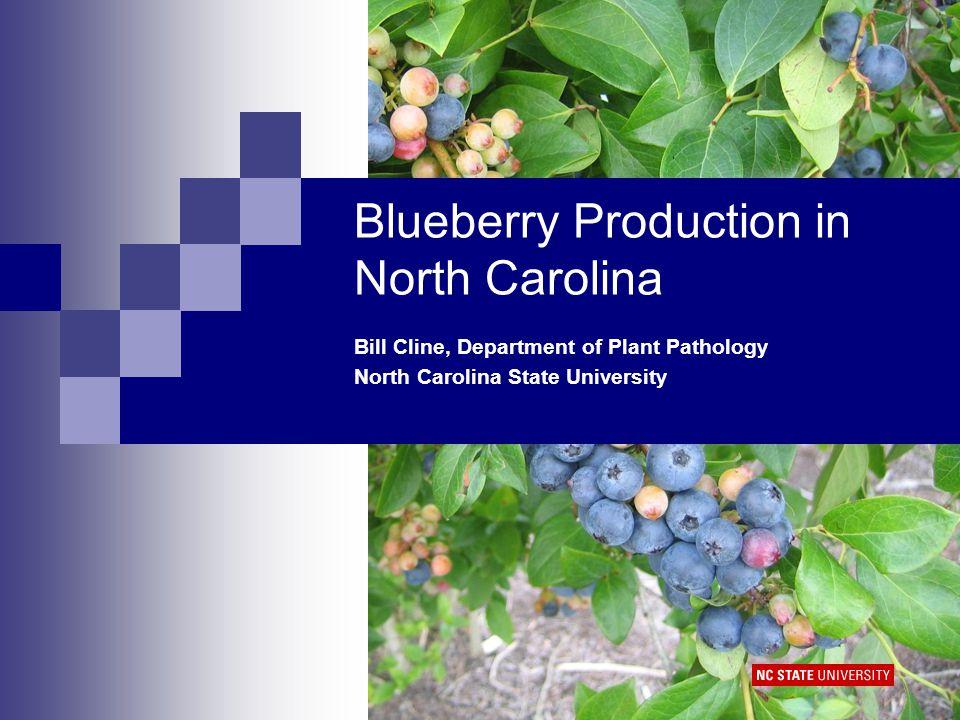 Southern Highbush Cultivars STANDARDS: O'Neal, Star, Legacy (shown), Reveille, Bladen, Southern Belle, Southmoon NEWER CVS: Rebel, New Hanover, Camellia, Springhigh, Emerald, Jewel