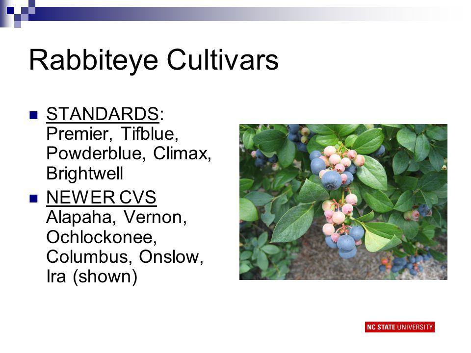 Rabbiteye Cultivars STANDARDS: Premier, Tifblue, Powderblue, Climax, Brightwell NEWER CVS Alapaha, Vernon, Ochlockonee, Columbus, Onslow, Ira (shown)