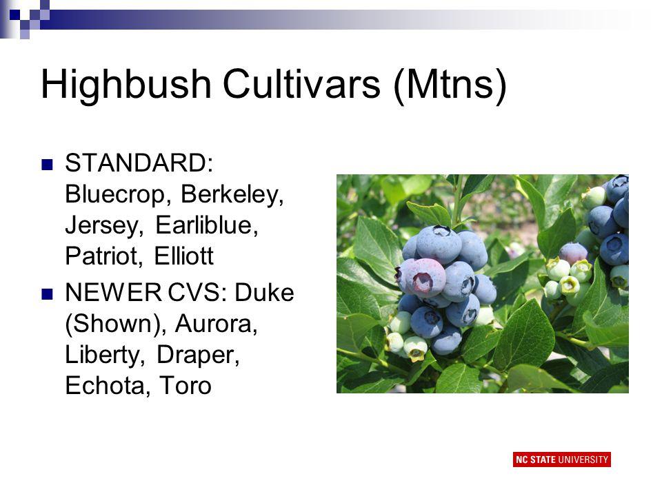 Highbush Cultivars (Mtns) STANDARD: Bluecrop, Berkeley, Jersey, Earliblue, Patriot, Elliott NEWER CVS: Duke (Shown), Aurora, Liberty, Draper, Echota, Toro