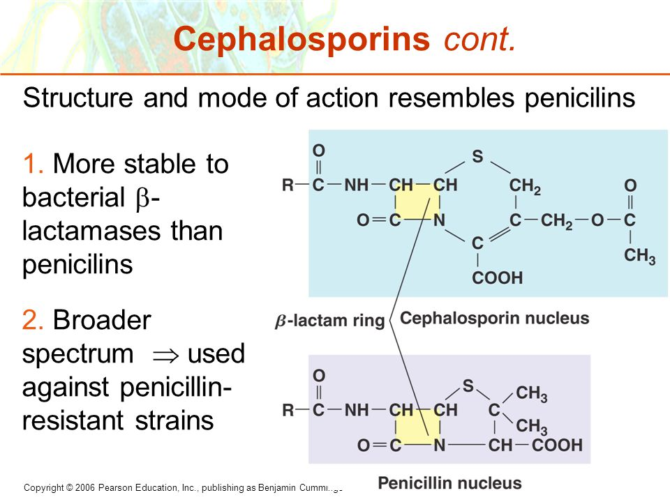 Copyright © 2006 Pearson Education, Inc., publishing as Benjamin Cummings Cephalosporins cont. Structure and mode of action resembles penicilins 1. Mo