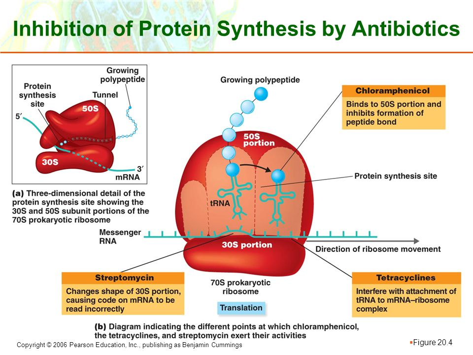 Copyright © 2006 Pearson Education, Inc., publishing as Benjamin Cummings Inhibition of Protein Synthesis by Antibiotics  Figure 20.4