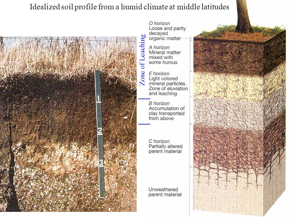Idealized soil profile from a humid climate at middle latitudes Zone of Leaching