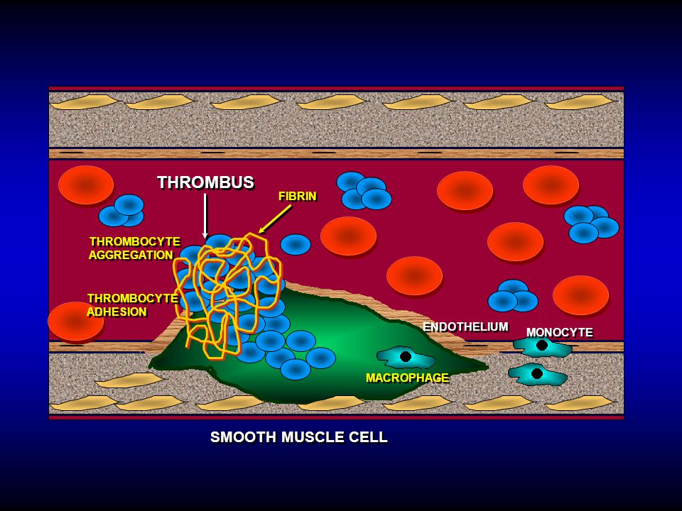 Platelet surface membrane receptors play important role