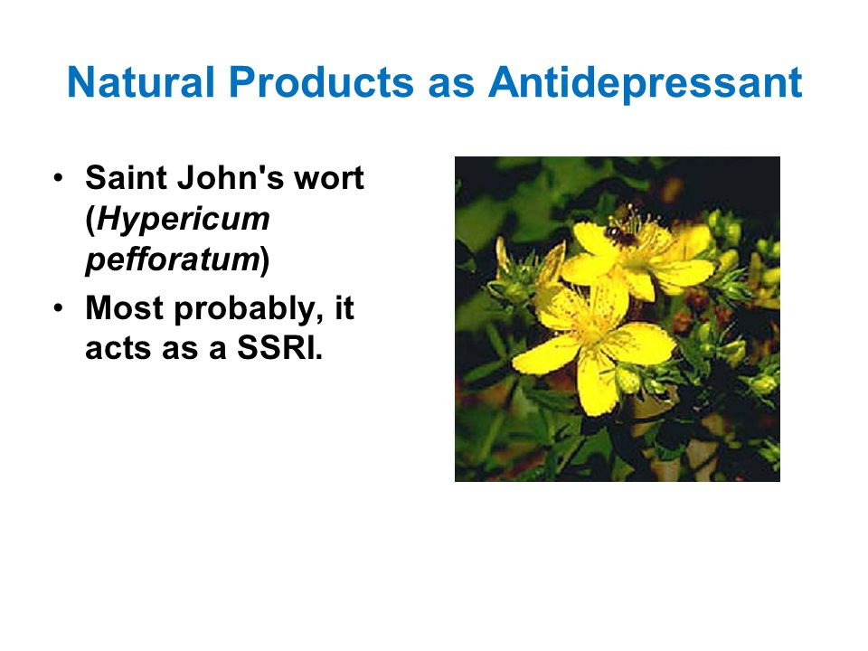 Natural Products as Antidepressant Saint John s wort (Hypericum pefforatum) Most probably, it acts as a SSRI.