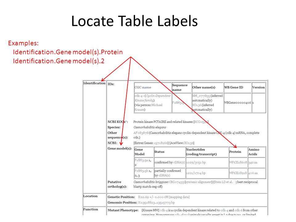 Locate Table Labels Examples: Identification.Gene model(s).Protein Identification.Gene model(s).2