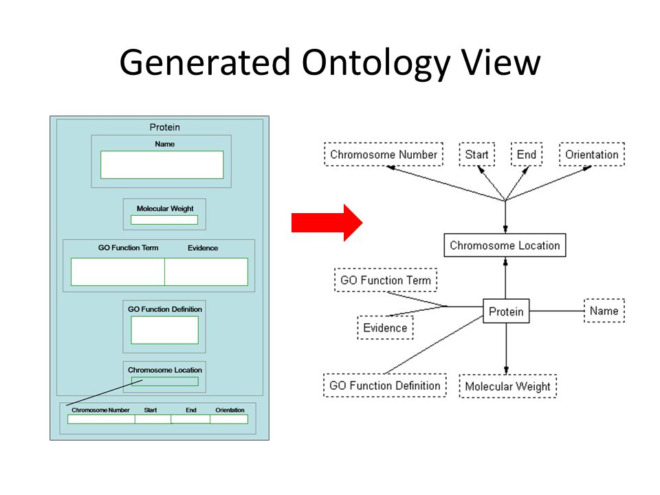 Generated Ontology View
