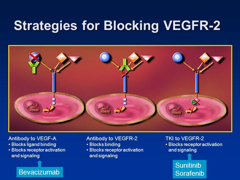 Strategies for Blocking VEGFR-2 Antibody to VEGF-A Blocks ligand binding Blocks receptor activation and signaling Antibody to VEGFR-2 Blocks binding B