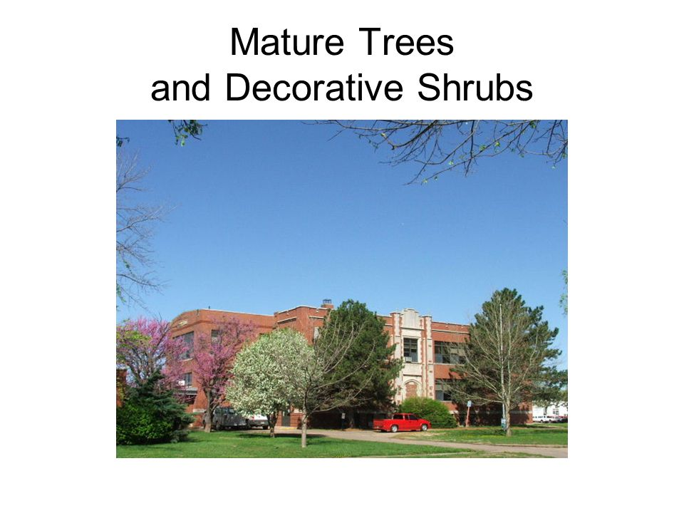 Mature Trees and Decorative Shrubs