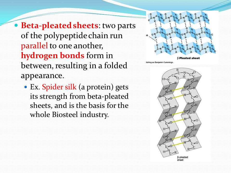 Beta-pleated sheets: two parts of the polypeptide chain run parallel to one another, hydrogen bonds form in between, resulting in a folded appearance.
