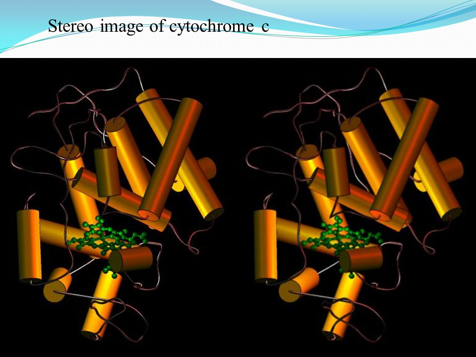 Stereo image of cytochrome c