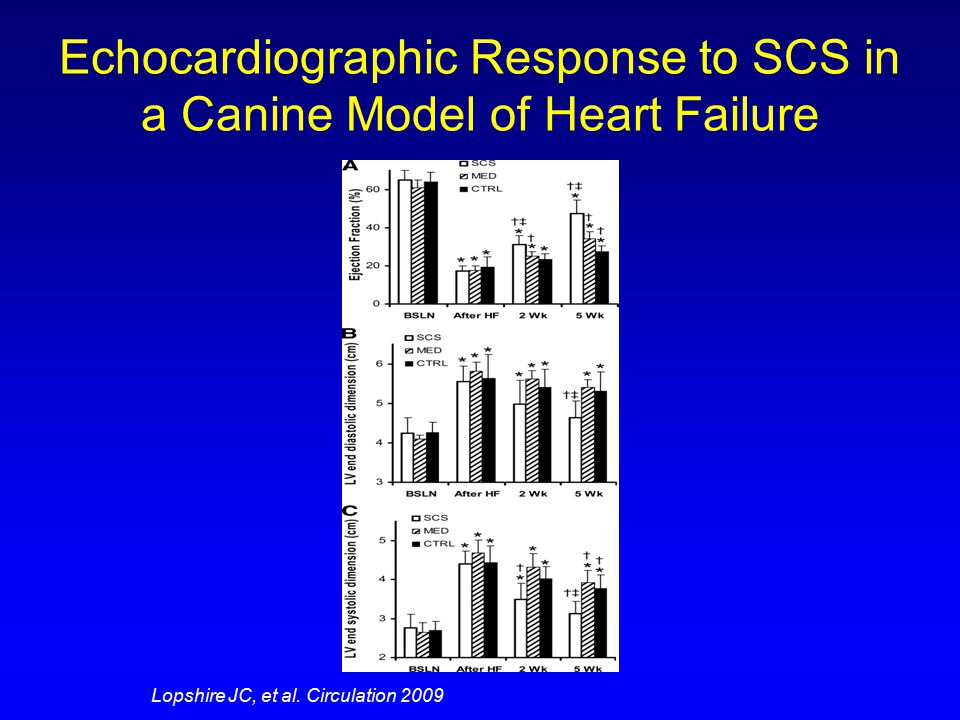 Clinical Response to SCS in a Canine Model of Heart Failure Lopshire JC, et al. Circulation 2009