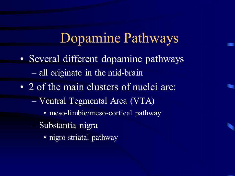 Extra-pyramidal Symptoms Parkinsonian-like symptoms – Parkinson's Disease = too little dopamine »due to degeneration of dopaminergic neurons bradykinesia rigidity –shuffling gait tremor