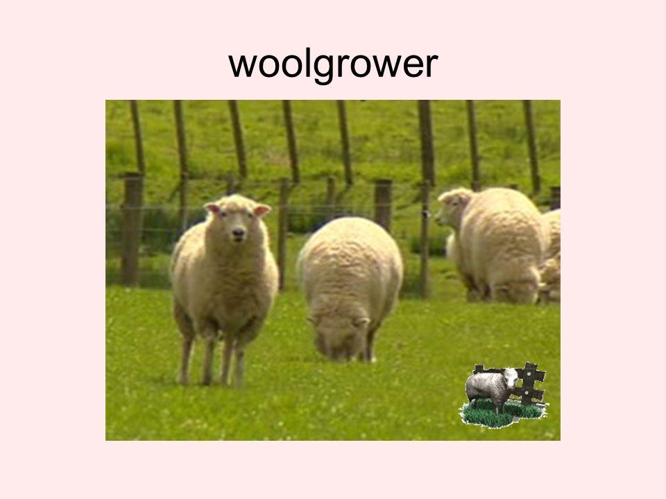 woolgrower