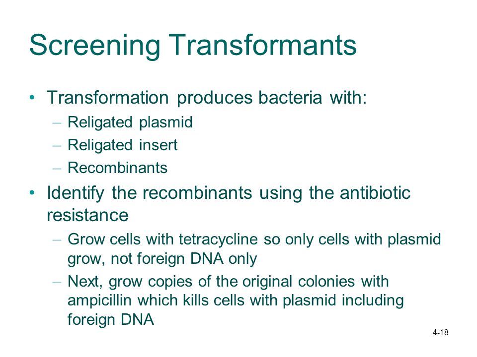 4-18 Screening Transformants Transformation produces bacteria with: –Religated plasmid –Religated insert –Recombinants Identify the recombinants using the antibiotic resistance –Grow cells with tetracycline so only cells with plasmid grow, not foreign DNA only –Next, grow copies of the original colonies with ampicillin which kills cells with plasmid including foreign DNA