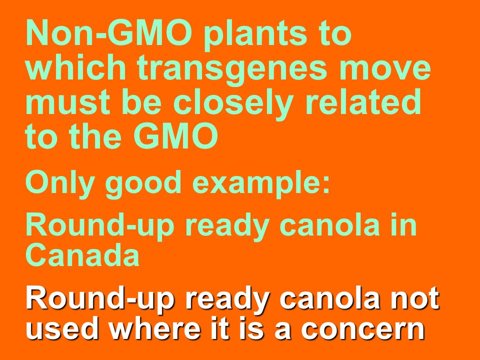 Non-GMO plants to which transgenes move must be closely related to the GMO Only good example: Round-up ready canola in Canada Round-up ready canola no