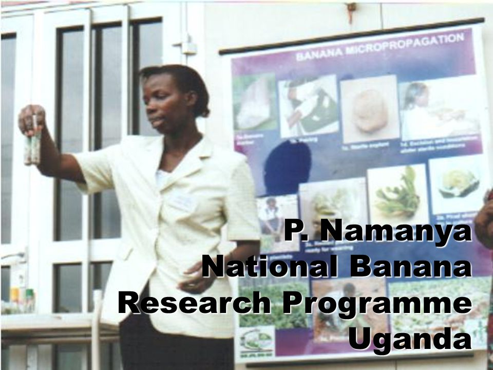 P. Namanya National Banana Research Programme Uganda