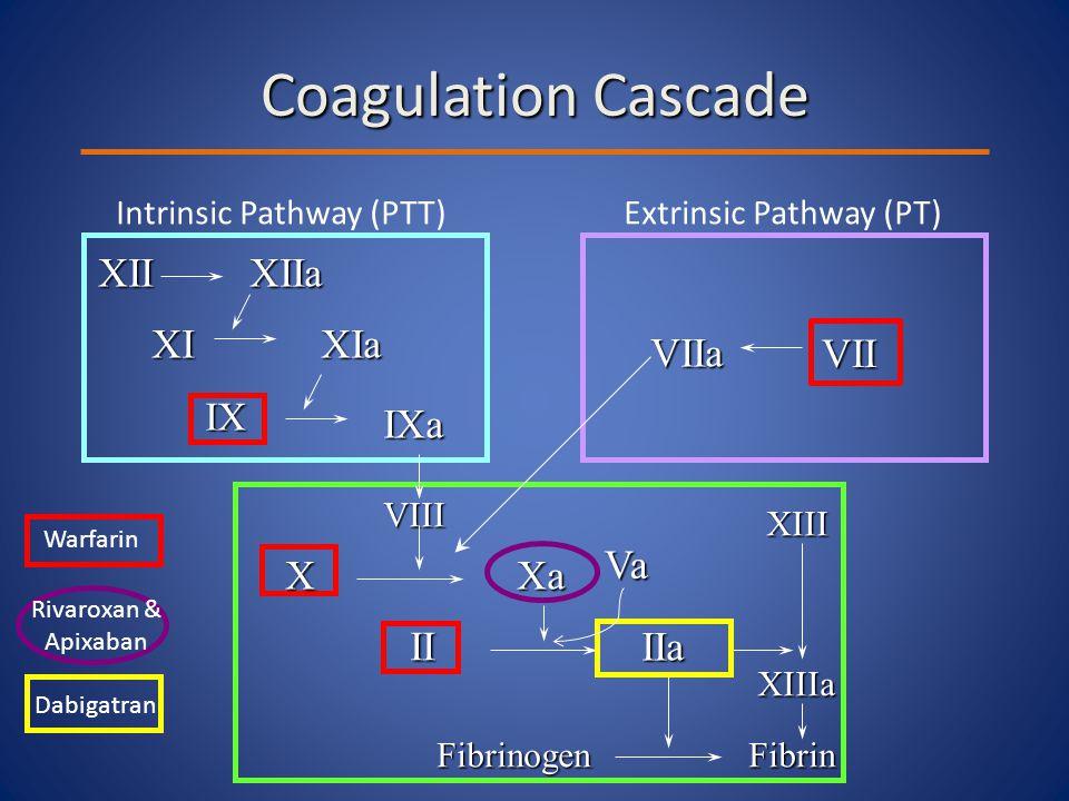 Rivaroxan & Apixaban Coagulation Cascade XIIXIIa XIXIa IX IXa VIIa Intrinsic Pathway (PTT)Extrinsic Pathway (PT) XaX VIII II IIa XIII FibrinogenFibrin XIIIa Warfarin Dabigatran Va VII