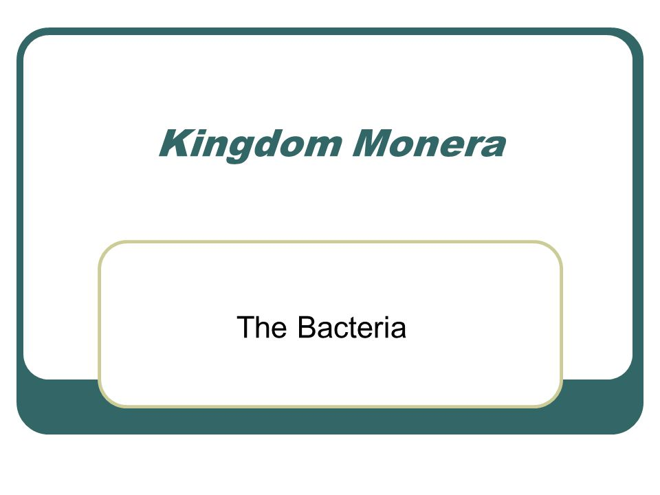 Kingdom Monera The Bacteria