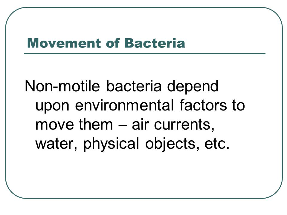Movement of Bacteria Non-motile bacteria depend upon environmental factors to move them – air currents, water, physical objects, etc.
