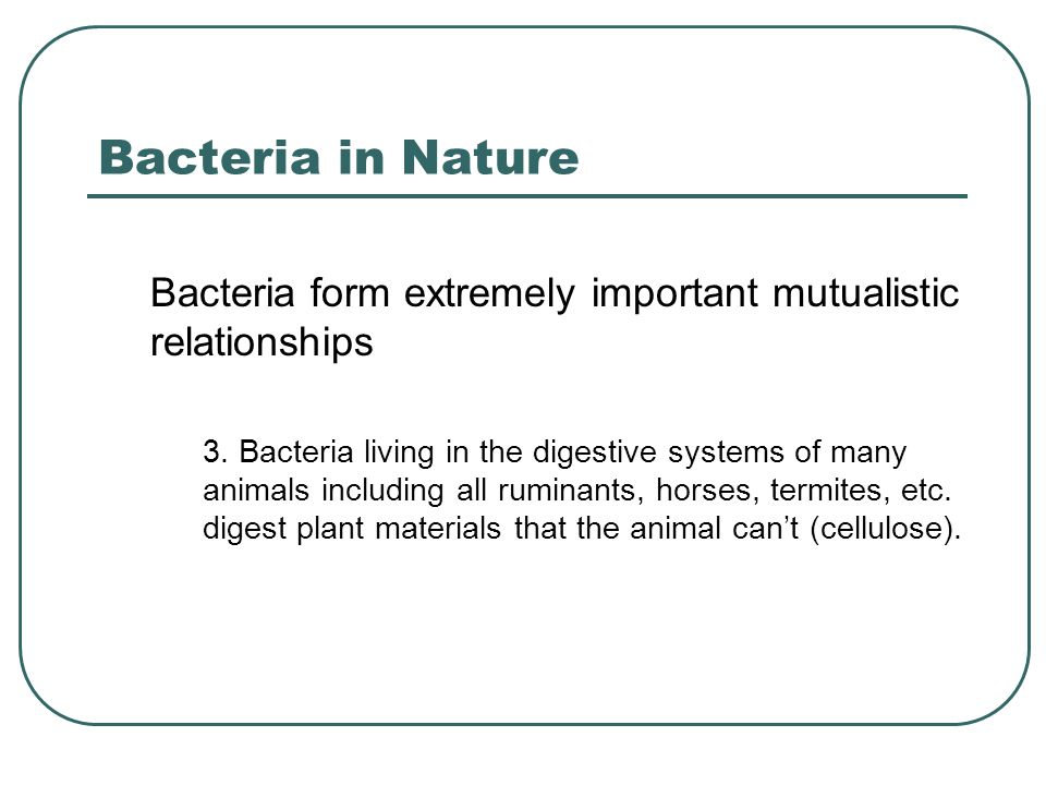 Bacteria in Nature Bacteria form extremely important mutualistic relationships 3. Bacteria living in the digestive systems of many animals including a