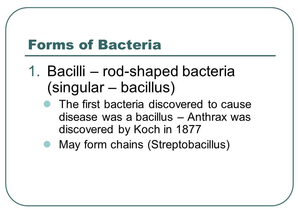 Forms of Bacteria 1.Bacilli – rod-shaped bacteria (singular – bacillus) The first bacteria discovered to cause disease was a bacillus – Anthrax was di