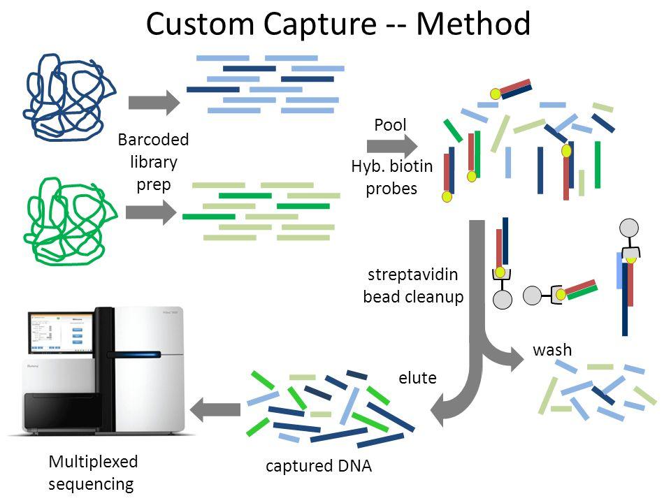 Barcoded library prep Custom Capture -- Method Pool wash captured DNA streptavidin bead cleanup elute Hyb.