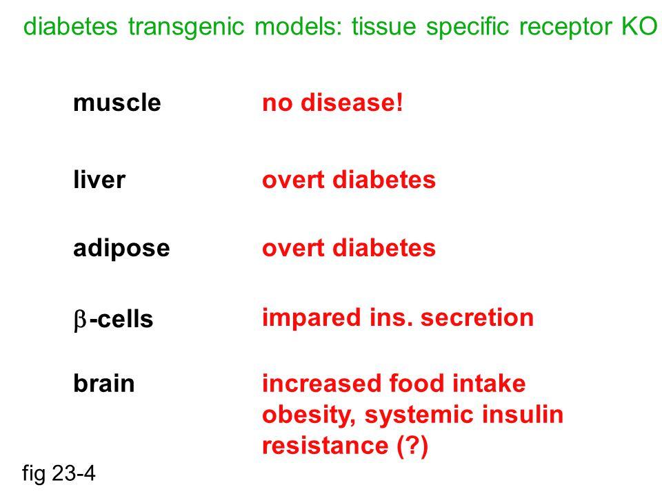 diabetes transgenic models: tissue specific receptor KO fig 23-4 muscle liver adipose  -cells brain no disease.