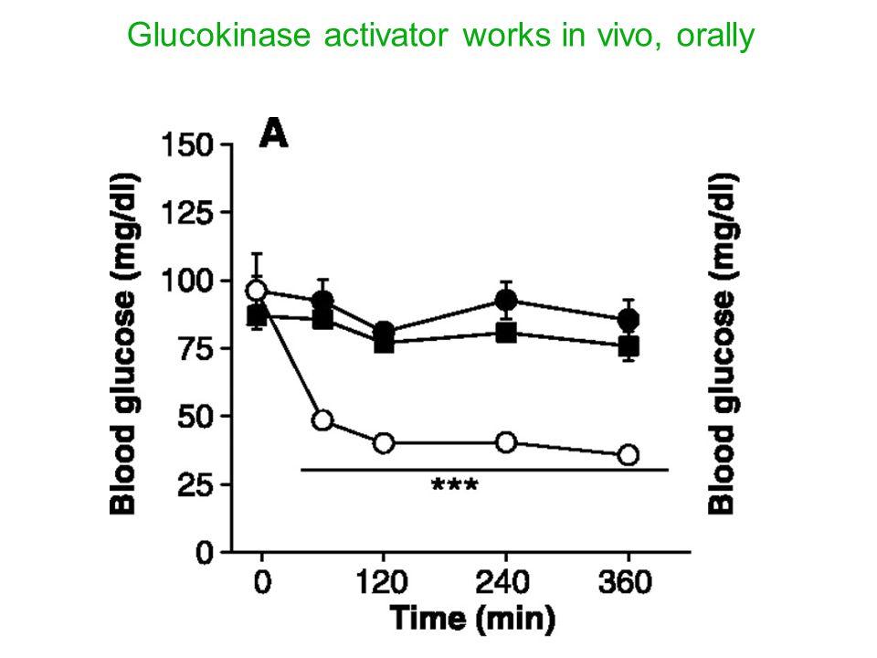 Glucokinase activator works in vivo, orally