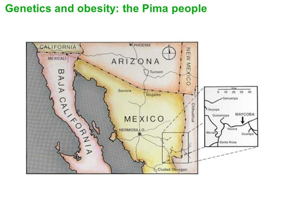 Genetics and obesity: the Pima people