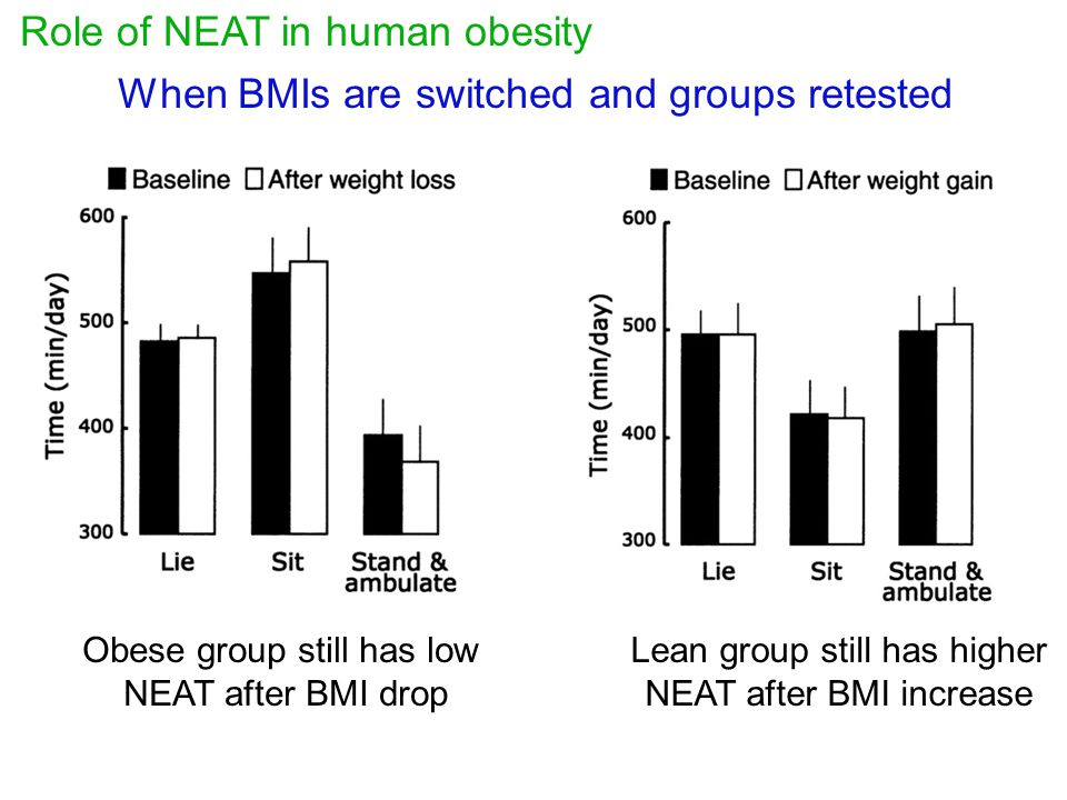 When BMIs are switched and groups retested Role of NEAT in human obesity Obese group still has low NEAT after BMI drop Lean group still has higher NEA