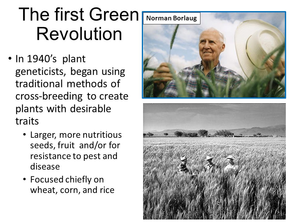 The first Green Revolution In 1940's plant geneticists, began using traditional methods of cross-breeding to create plants with desirable traits Larger, more nutritious seeds, fruit and/or for resistance to pest and disease Focused chiefly on wheat, corn, and rice Norman Borlaug