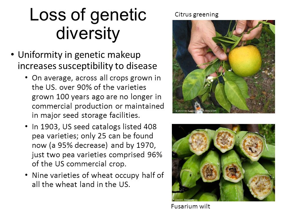 Loss of genetic diversity Uniformity in genetic makeup increases susceptibility to disease On average, across all crops grown in the US.