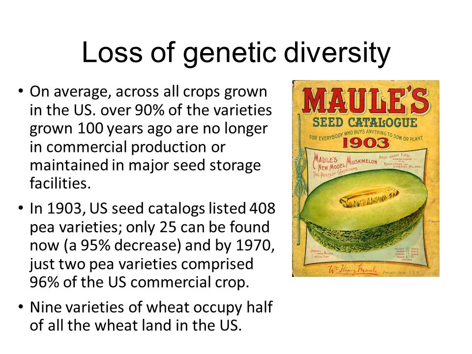 Loss of genetic diversity A landrace is a local variety of a domesticated animal or plant species which has developed largely by adaptation to the natural and cultural environment in which it lives.