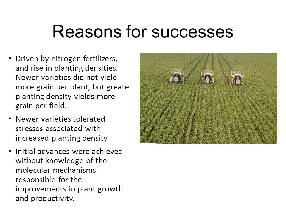Reasons for successes Driven by nitrogen fertilizers, and rise in planting densities.