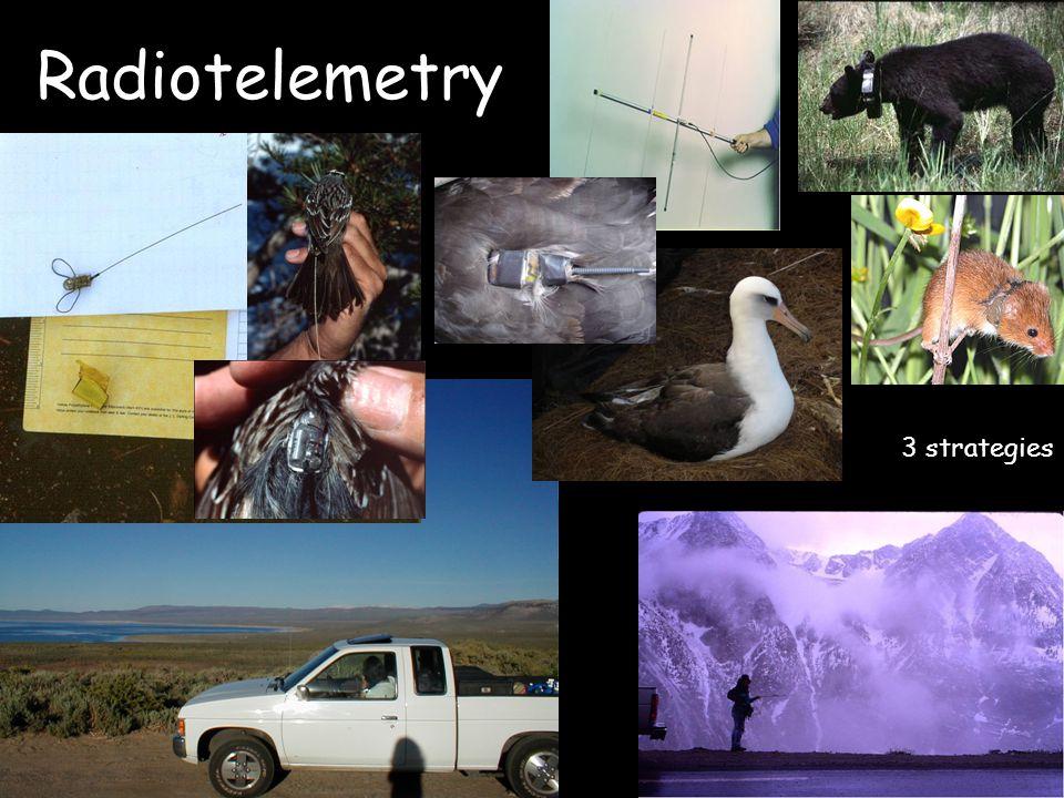 Radiotelemetry 3 strategies