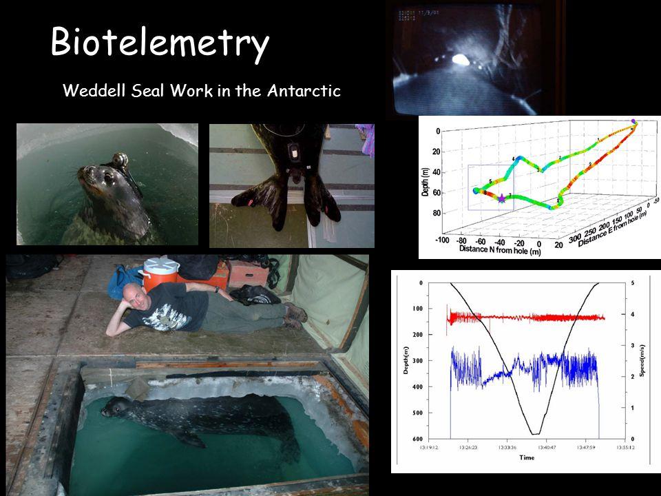 Biotelemetry Weddell Seal Work in the Antarctic