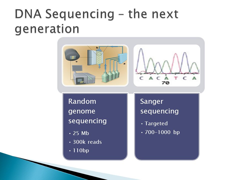 Random genome sequencing 25 Mb 300k reads 110bp Sanger sequencing Targeted 700-1000 bp