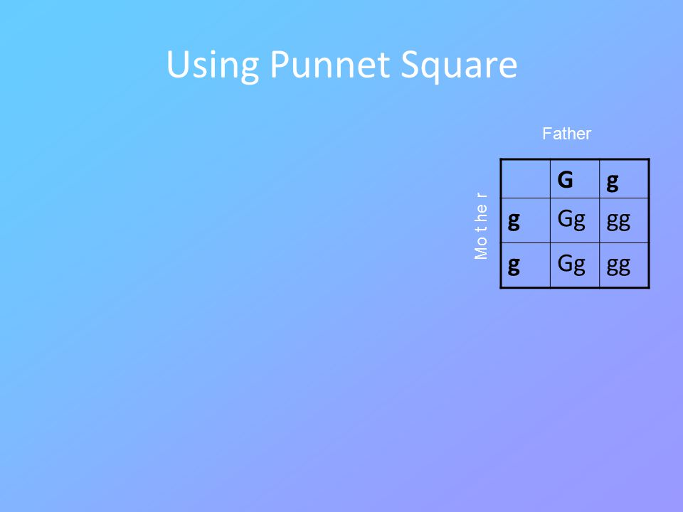 Using Punnet Square Gg gGggg gGggg Mo t he r Father