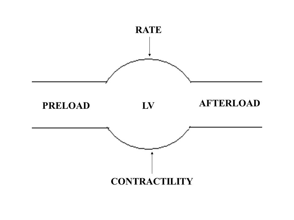 PRELOAD AFTERLOAD CONTRACTILITY RATE LV