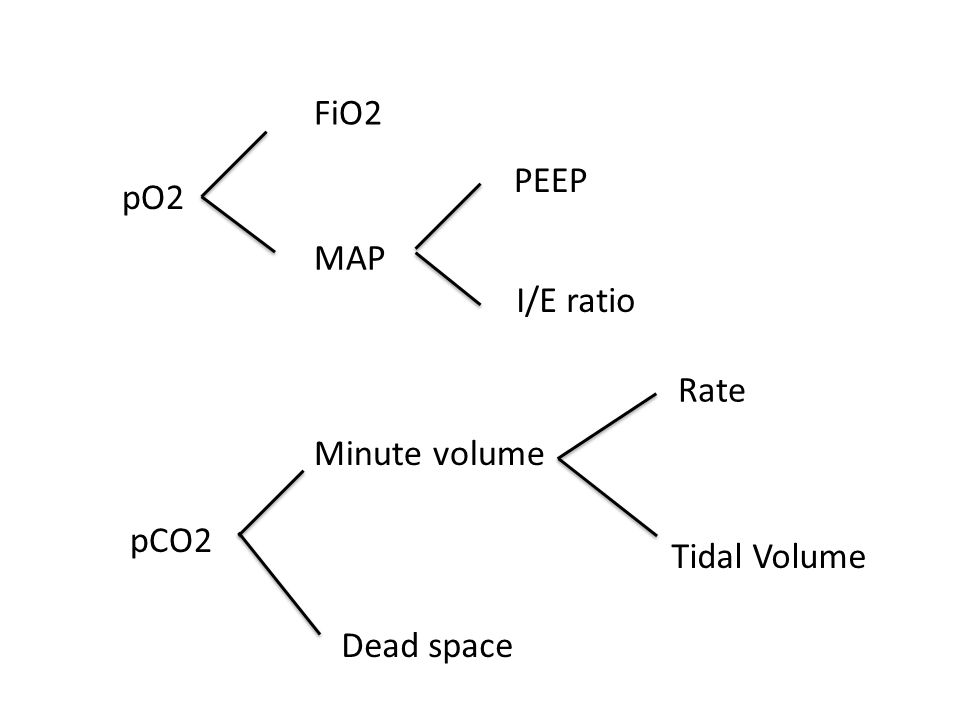 pO2 FiO2 MAP PEEP I/E ratio pCO2 Minute volume Rate Tidal Volume Dead space