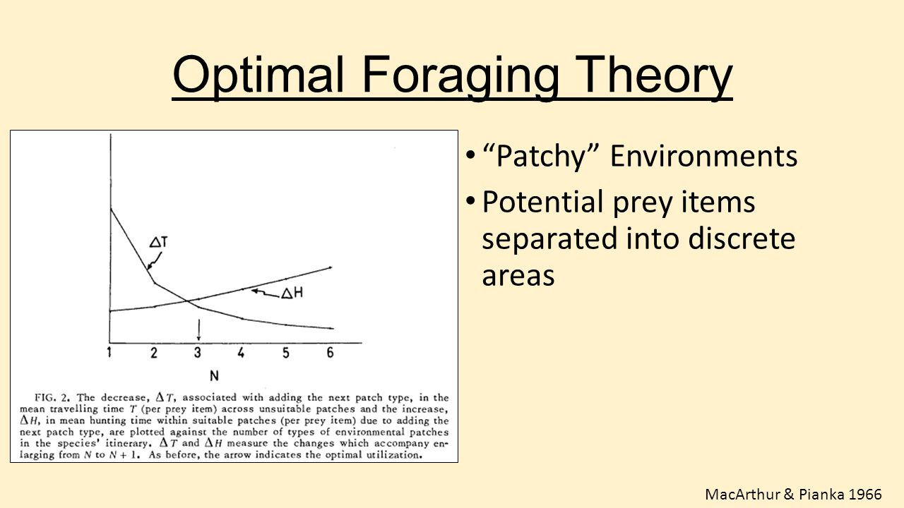 """Optimal Foraging Theory """"Patchy"""" Environments Potential prey items separated into discrete areas MacArthur & Pianka 1966"""