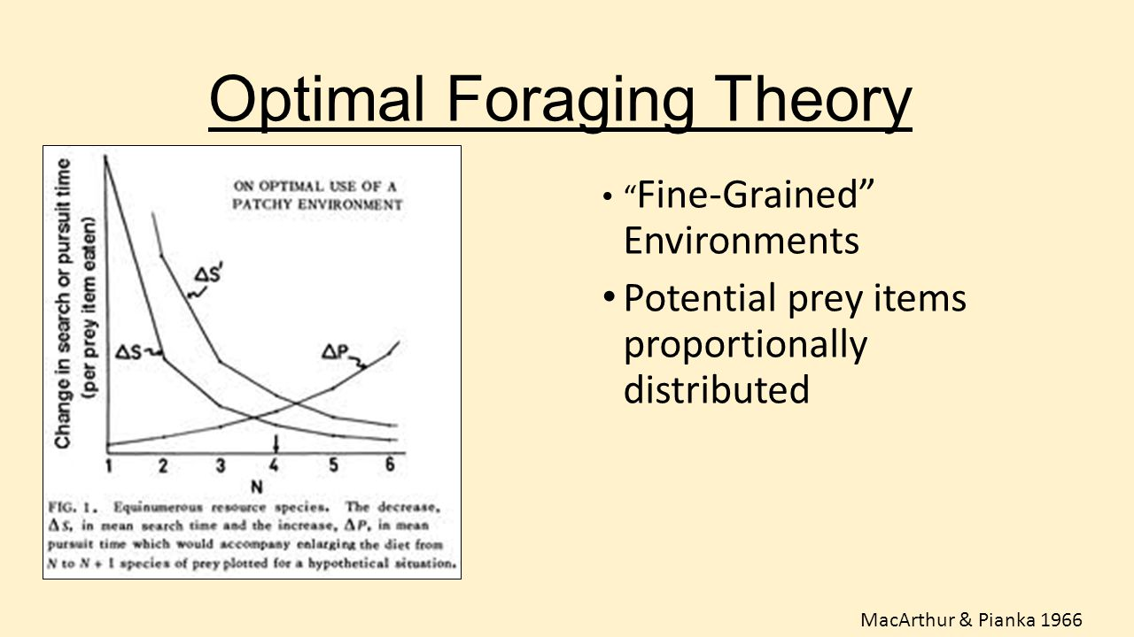 """Optimal Foraging Theory """" Fine-Grained"""" Environments Potential prey items proportionally distributed MacArthur & Pianka 1966"""