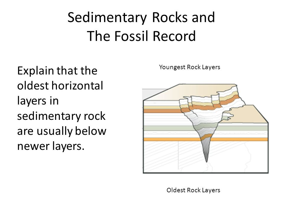 Sedimentary Rocks and The Fossil Record Explain that the oldest horizontal layers in sedimentary rock are usually below newer layers.