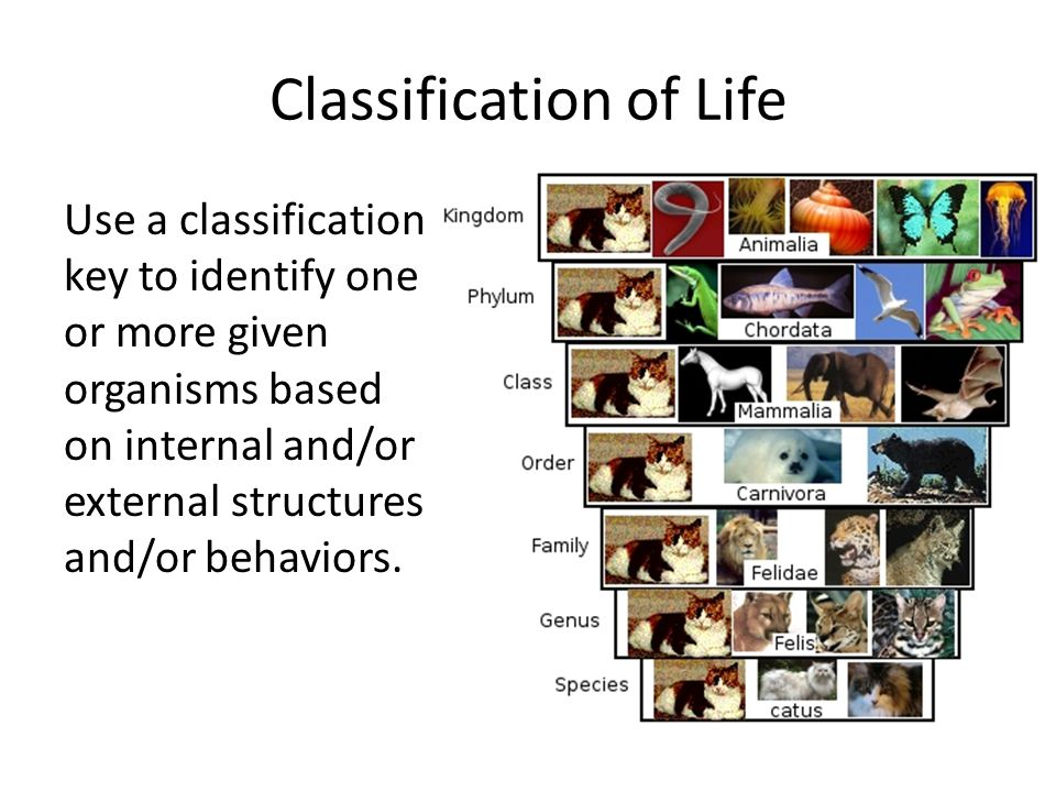 Classification of Life Use a classification key to identify one or more given organisms based on internal and/or external structures and/or behaviors.