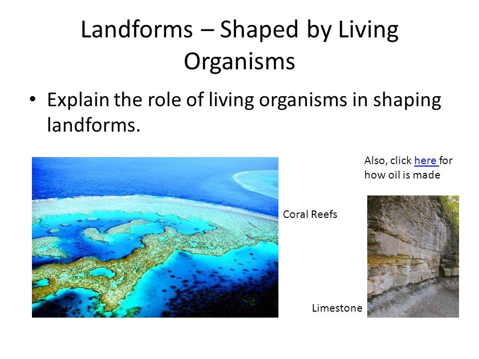 Landforms – Shaped by Living Organisms Explain the role of living organisms in shaping landforms.