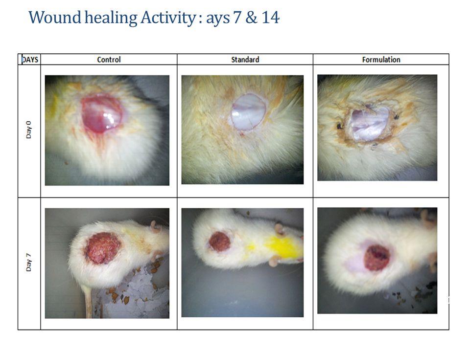 Wound healing Activity : ays 7 & 14 13