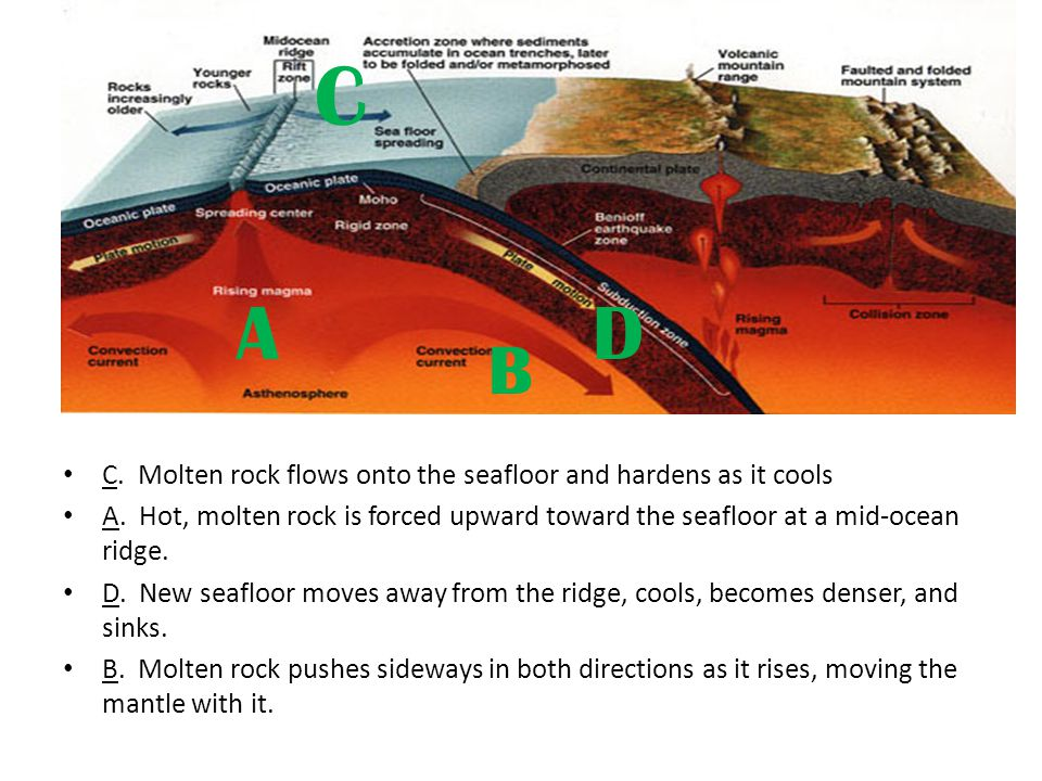 C. Molten rock flows onto the seafloor and hardens as it cools A. Hot, molten rock is forced upward toward the seafloor at a mid-ocean ridge. D. New s