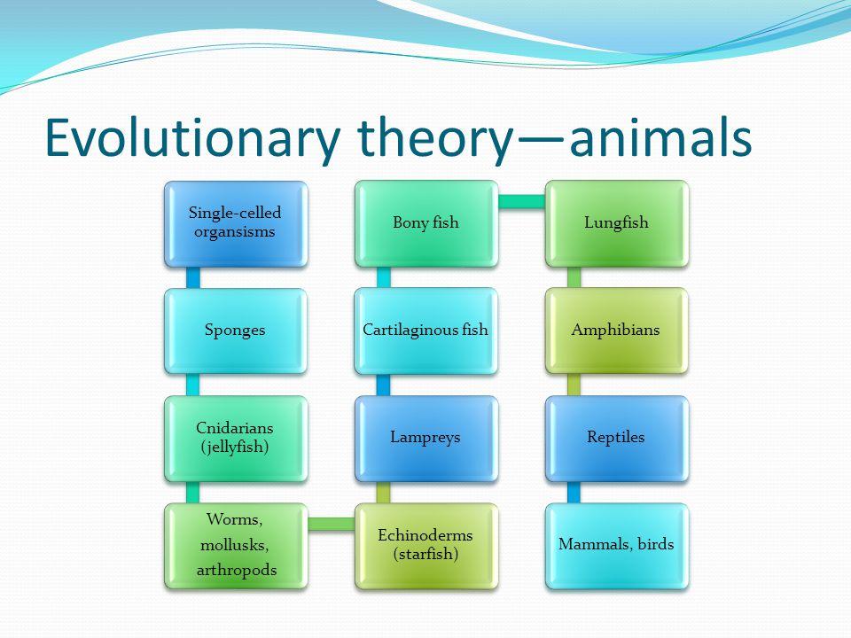 Evolutionary theory—animals Single-celled organsisms Sponges Cnidarians (jellyfish) Worms, mollusks, arthropods Echinoderms (starfish) LampreysCartila